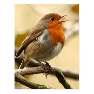 Singing Robin Postcard