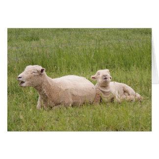 Singing Sheep Greeting Card