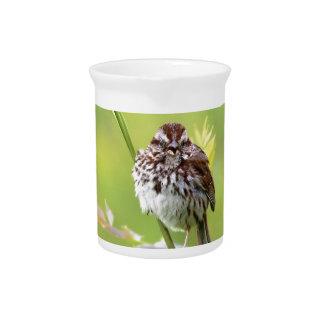 Singing Sparrow Beverage Pitcher