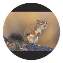 Singing Squirrel Classic Round Sticker
