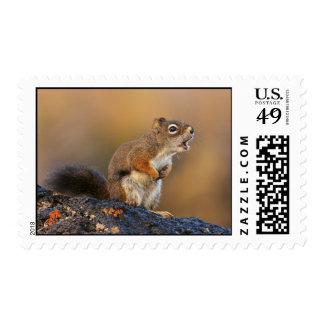 Singing Squirrel Stamp