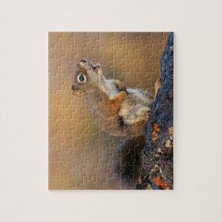 Singing Squirrel Puzzles