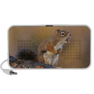 Singing Squirrel Speakers