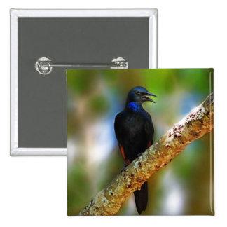 Singing Starling  blue bird Button