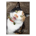 singing tabby, Happy Birthday! Greeting Cards