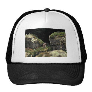 Singing Vole, Hall Island Trucker Hat