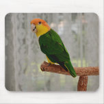 Singing White Bellied Caique Parrot Mouse Pad