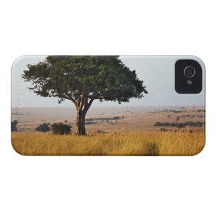 Single acacia tree on grassy plains, Masai Mara, Case-Mate iPhone 4 Case
