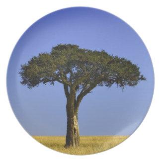 Single Acacia tree on grassy plains, Masai Mara, Melamine Plate