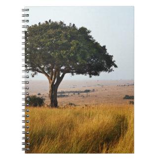 Single acacia tree on grassy plains, Masai Mara, Notebook