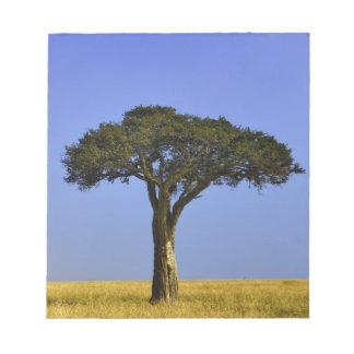 Single Acacia tree on grassy plains, Masai Mara, Memo Note Pad