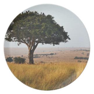 Single acacia tree on grassy plains, Masai Mara, Plate