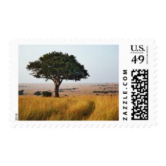 Single acacia tree on grassy plains, Masai Mara, Postage Stamp