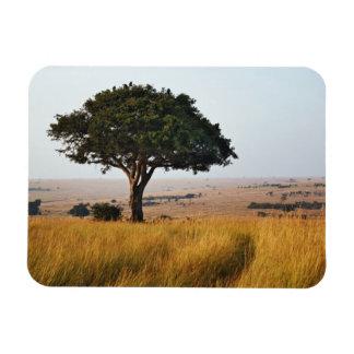 Single acacia tree on grassy plains, Masai Mara, Vinyl Magnet