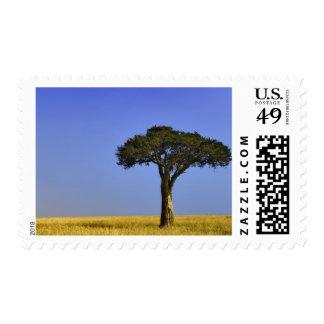 Single Acacia tree on grassy plains, Masai Mara, Stamp