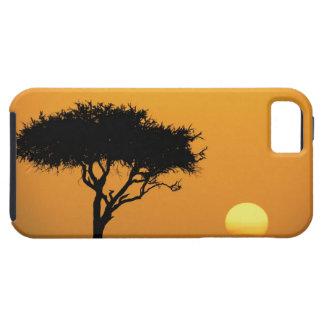 Single Acacia tree silhouetted at sunrise, Masai iPhone 5 Cover