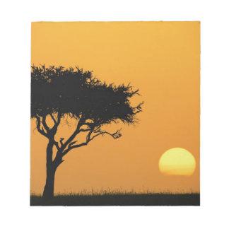 Single Acacia tree silhouetted at sunrise, Masai Note Pad