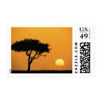 Single Acacia tree silhouetted at sunrise, Masai Postage