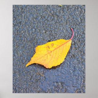 Single Beech Leaf Poster