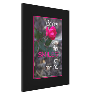 Single Bending Pink Rose Photograph Canvas Print