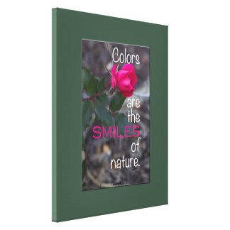 Single Bending Pink Rose Photograph, Green Border Canvas Print