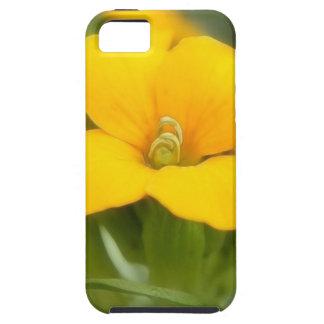 Single Bloom - Wallflower iPhone SE/5/5s Case