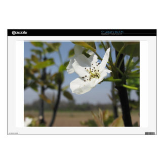 """Single blossom of a pear tree in spring 17"""" laptop skins"""