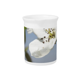 Single blossom of a pear tree in spring beverage pitcher