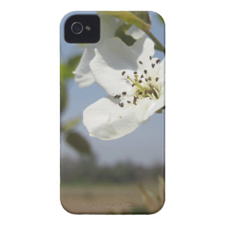Single blossom of a pear tree in spring iPhone 4 case