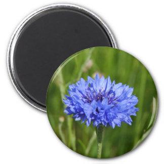 Single Blue Cornflower in green English Meadow 2 Inch Round Magnet