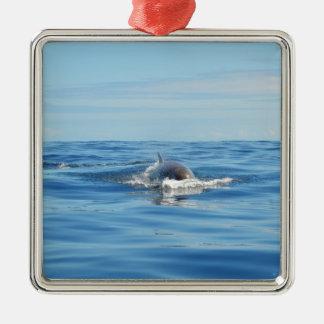 Single Bottlenose Whale Square Metal Christmas Ornament