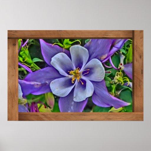 Single bright columbine flower Colorado poster