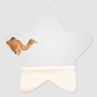 Single camel on Arabian sand dunes Star Sticker