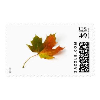 Single Coloured Maple Leaf On White Background Postage