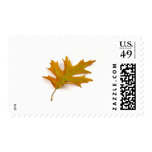 Single Coloured Northern Red Oak Leaf On White Bac Stamps