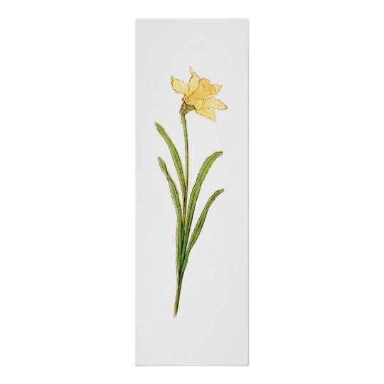 Single Daffodil Illustration by Kate Greenaway Poster
