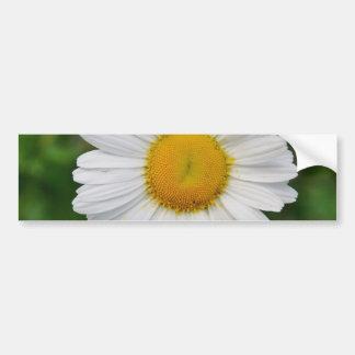 Single Daisy Flower Bumper Sticker