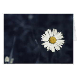 Single Daisy Flower Card