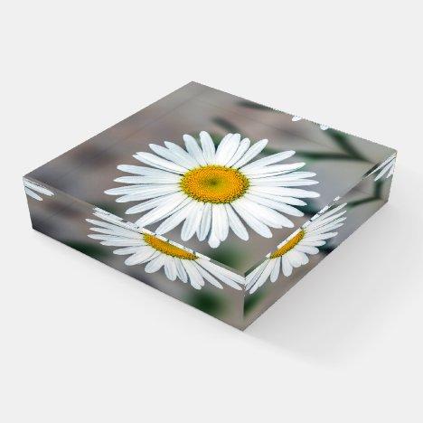 Single Daisy Flower Glass Paperweight