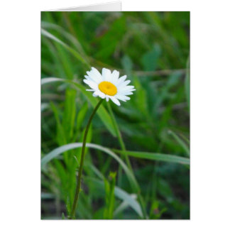 Single daisy greeting card