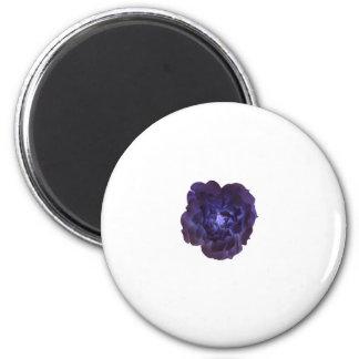 Single Dark Blue Tea Rose Magnet