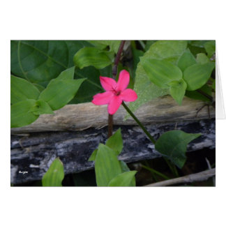 Single Flower Stationery Note Card