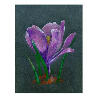 SIngle flower  crocus sketch  hand drawin pencil Postcard