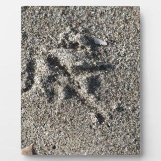 Single footprint of seagull bird on beach sand plaque