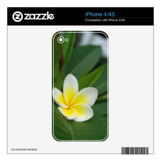 Single Frangipani Decals For iPhone 4S