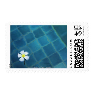 single frangipani flower floating in water postage stamp