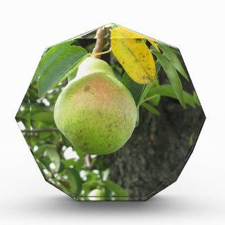 Single green pear hanging on the tree acrylic award