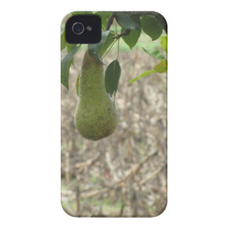 Single green pear hanging on the tree Case-Mate iPhone 4 case