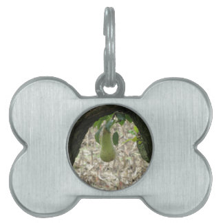 Single green pear hanging on the tree pet name tag