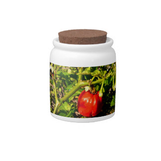 single habanero red pepper in plant candy jars